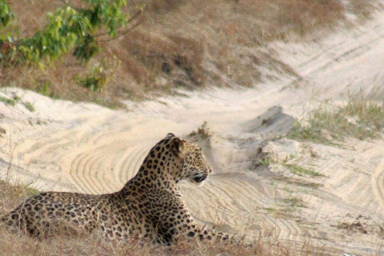 leopard-relaxing-at-wilpattu-national-park-sri-lanka