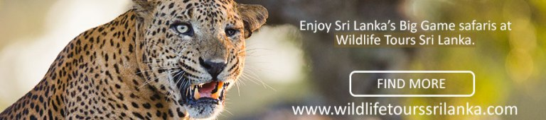 wildlife-tours-sri-lanka