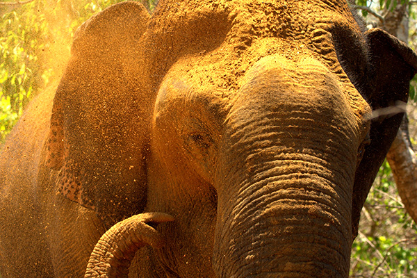 elephant-bath-sri-lankan-elephant