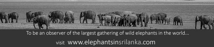 elephants-in-sri-lanka-banner