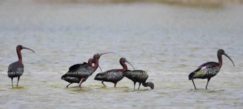 Rare Bird species spottedrecently