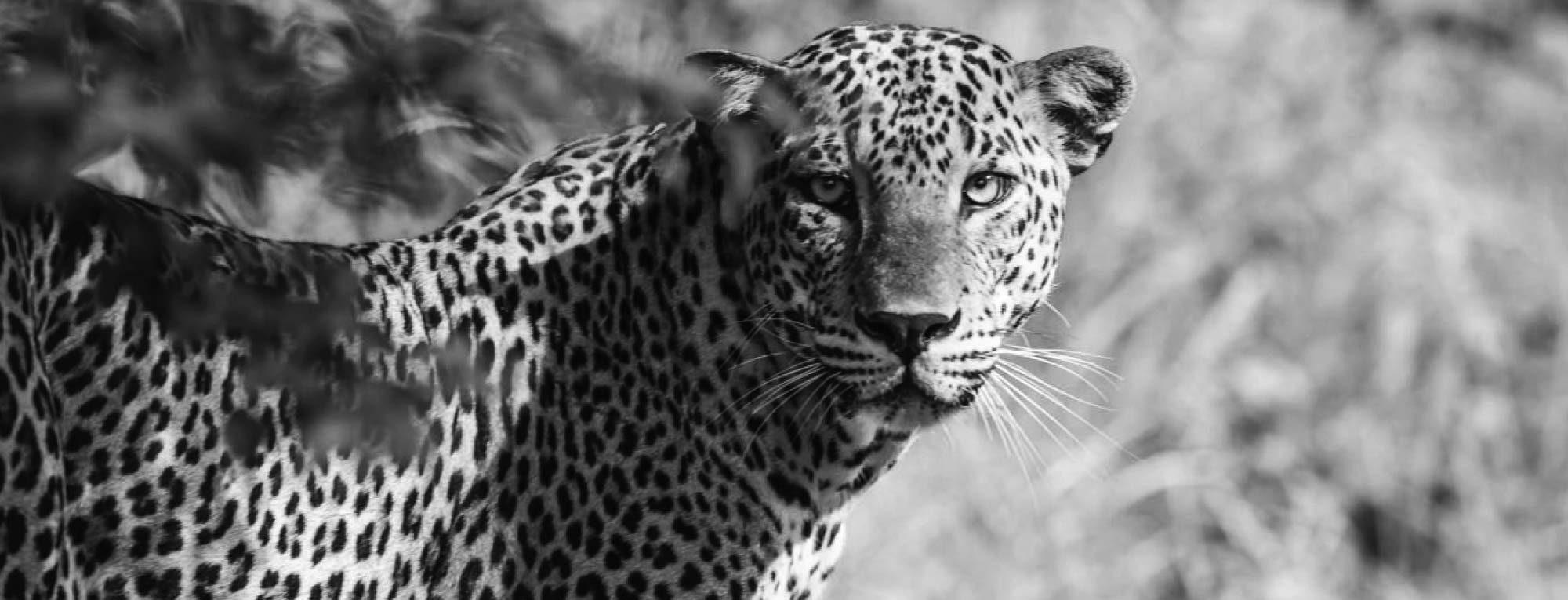Sri Lanka Wildlife Updates
